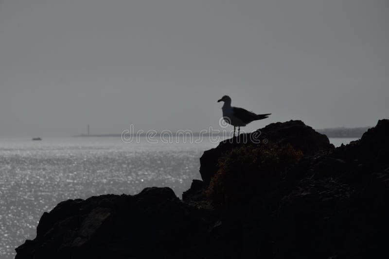 Seemöwe, die das Meer übersieht lizenzfreies stockfoto