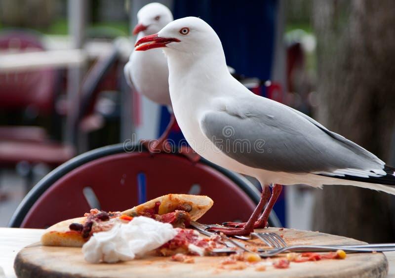Seemöwe, die menschliches Lebensmittel stiehlt lizenzfreie stockfotografie