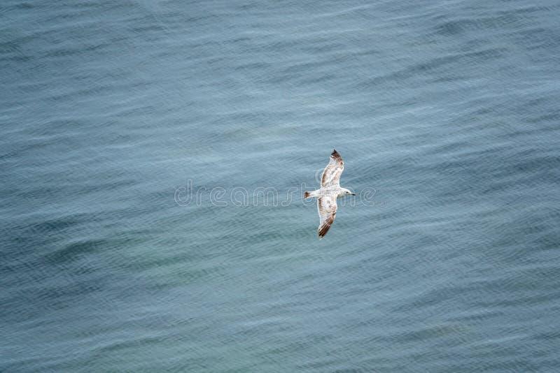 Seemöwe gleitet über dem blauen Meer und wird von oben fotografiert lizenzfreie stockbilder