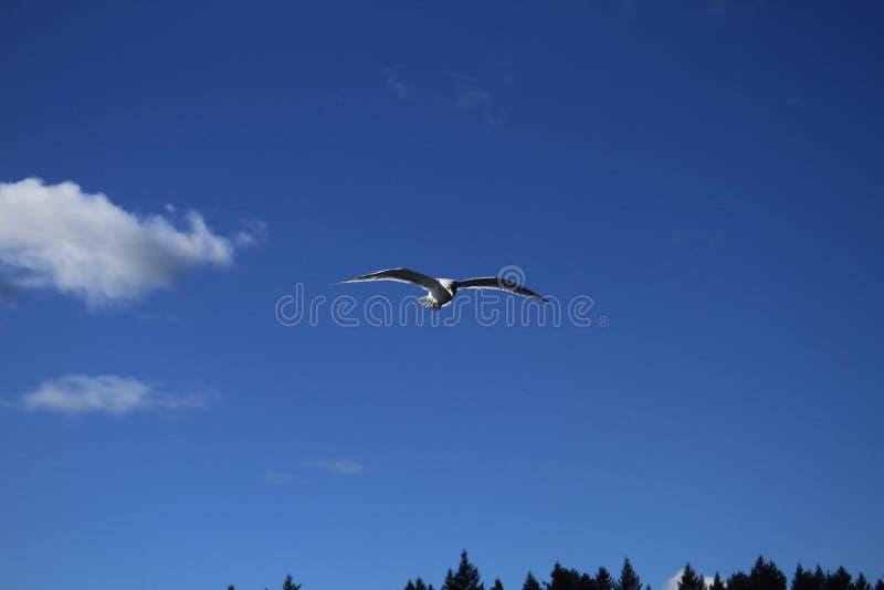 Seemöwe im blauen Himmel lizenzfreie stockbilder