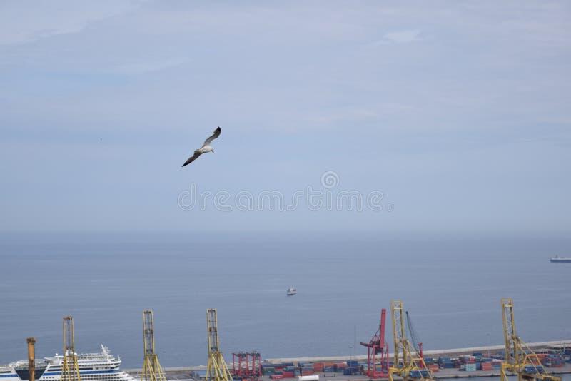 Seemöwe im Hafen von Barcelona stockfoto
