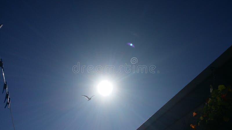 Seemöwe im sonnigen Himmel lizenzfreies stockbild