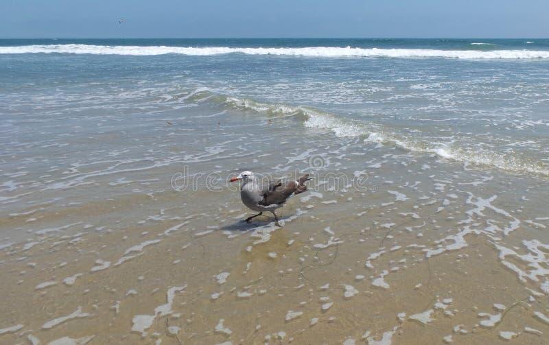 Seemöwe im Strand stockfoto