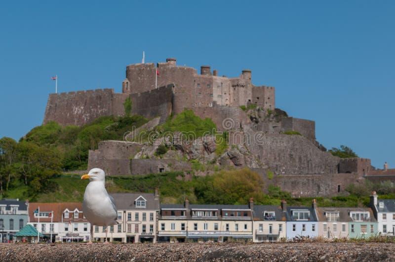 Seemöwe nahe Mont Orgueil-Schloss lizenzfreies stockfoto
