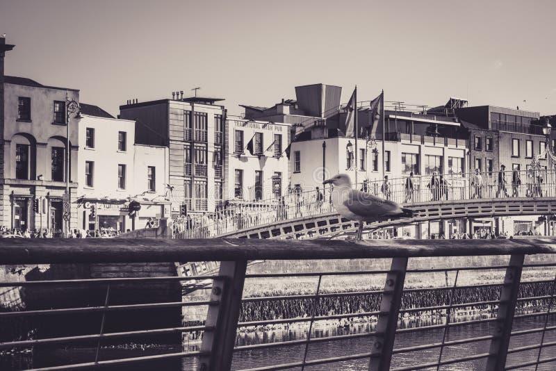 Seemöwe schützt die Stadt lizenzfreie stockfotos