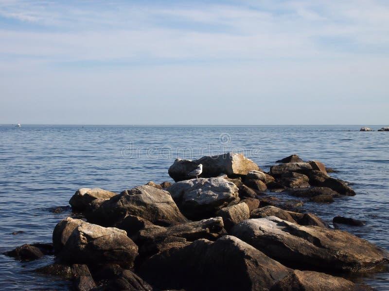 Seemöwe schaukelt auf die Spitzenfelsen, die in den Ozean jettying sind lizenzfreie stockfotografie