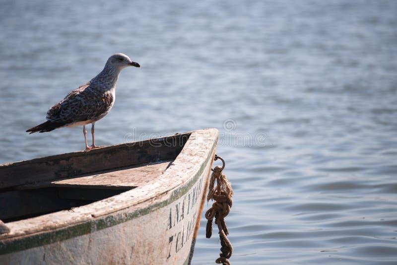 Seemöwe zwischen Booten auf dem Wasser lizenzfreie stockfotografie