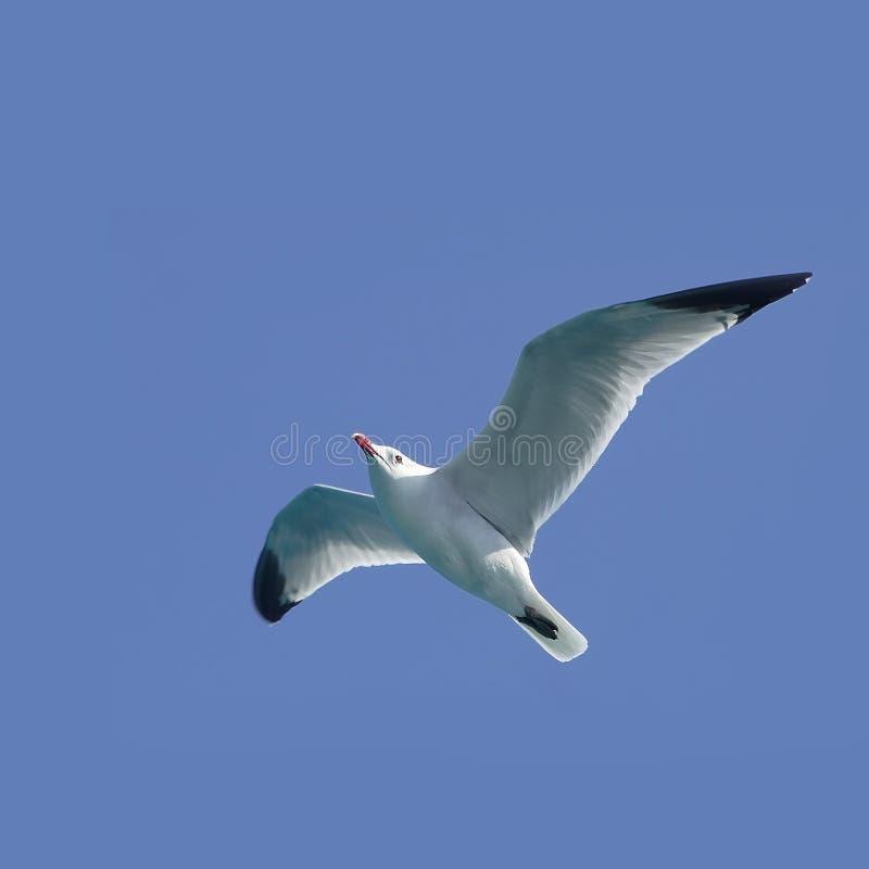 Seemöweflugwesen lizenzfreie stockfotos
