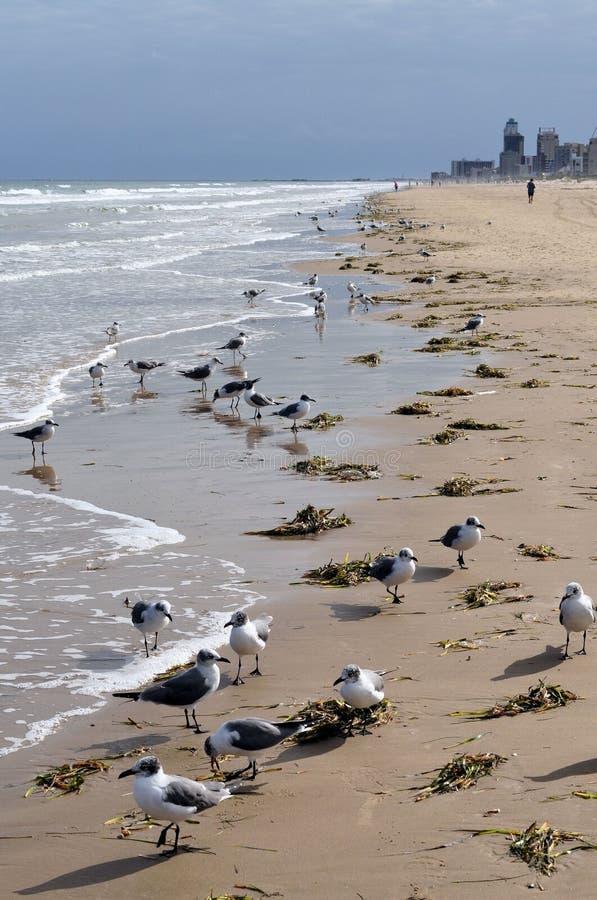 Seemöwemenge auf Strand stockfoto
