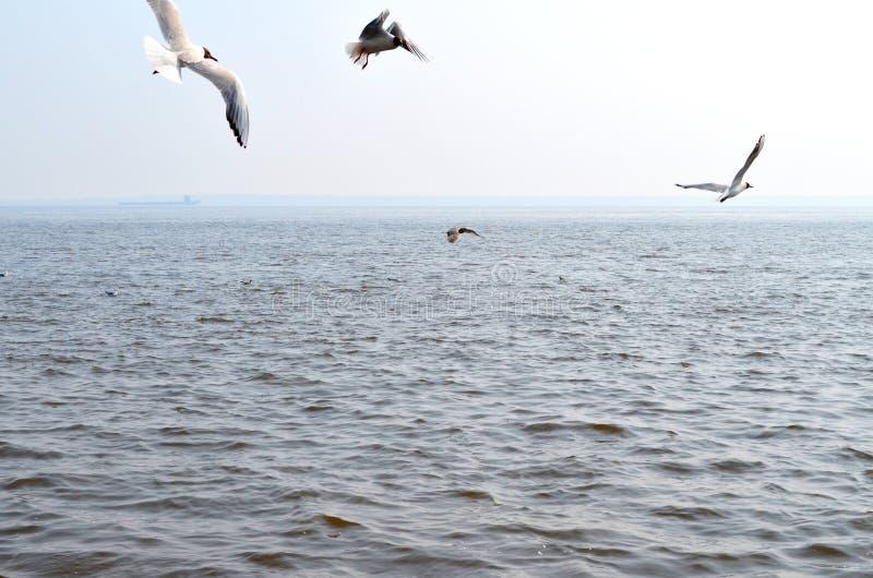 Seemöwen über dem Fluss lizenzfreies stockbild