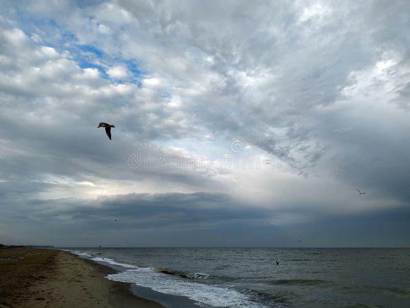 Seemöwen über den Wellen lizenzfreie stockbilder
