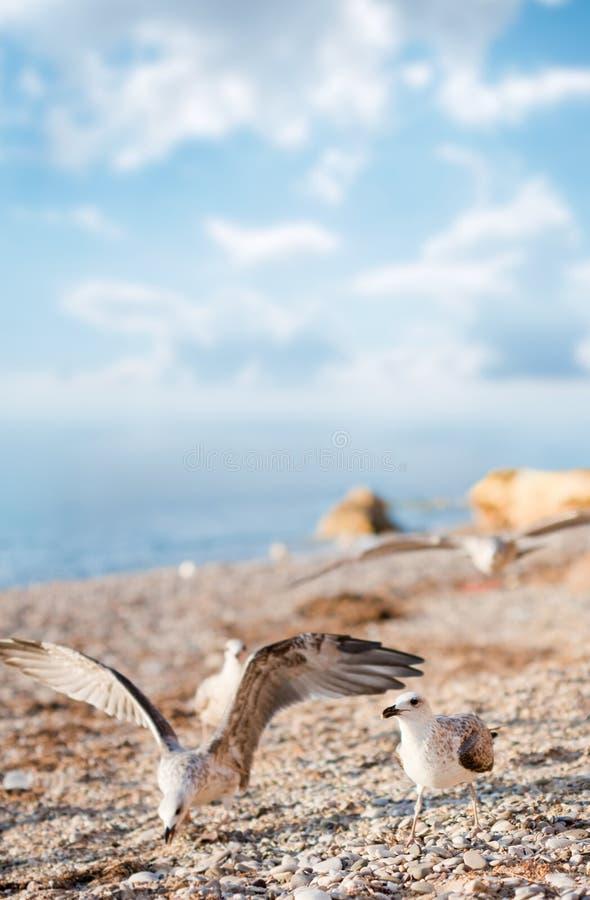 Seemöwen auf dem Strand lizenzfreie stockfotografie