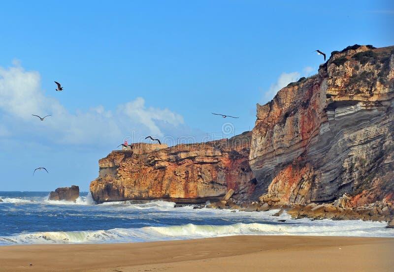 Seemöwen auf dem Strand von Nazare stockfotos