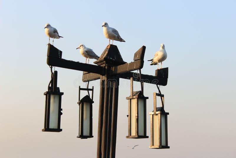 Seemöwen auf der Lampe lizenzfreie stockbilder