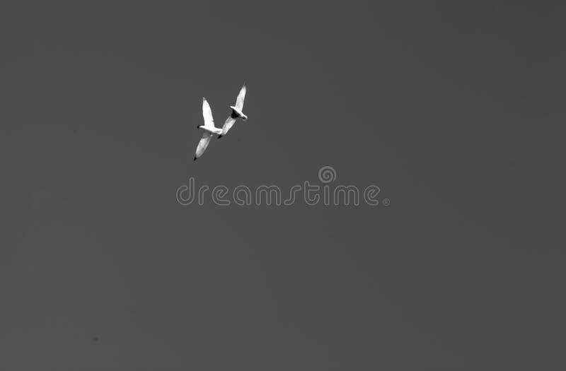 Seemöwen auf Himmel lizenzfreie stockfotografie