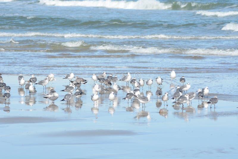 Seemöwen bleiben zusammen aus Sicherheitsgründen während auf dem Ozeansand stockbilder