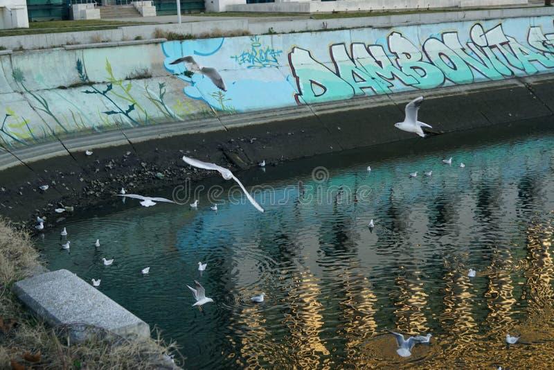 Seemöwen in Bukarest lizenzfreie stockfotografie