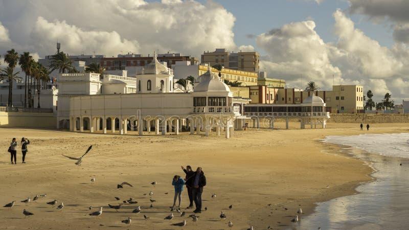 Seemöwen an Caleta-Strand Cadiz Spanien stockfotos