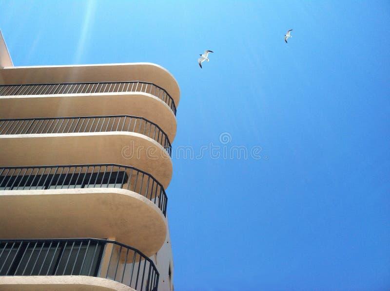 Seemöwen, die über ein Gebäude fliegen stockfotografie
