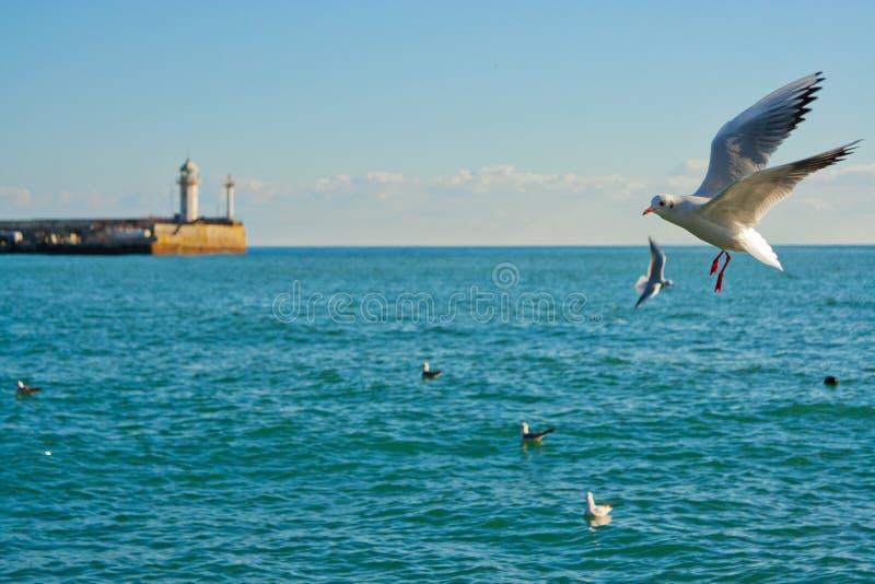 Seemöwen, die über eine Bucht in Jalta, Krim fliegen lizenzfreies stockbild