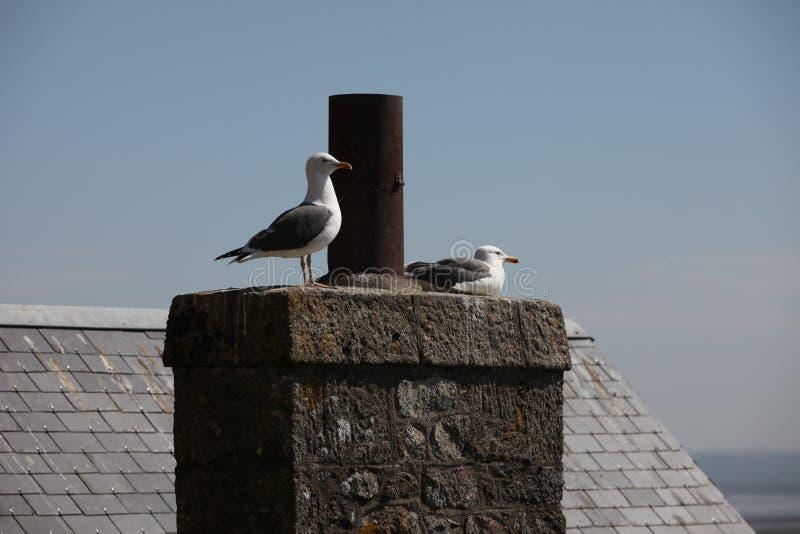 Seemöwen, die auf dem Dach sitzen stockfoto