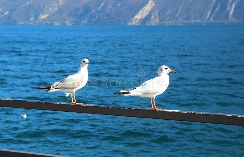 Seemöwen, die auf dem Ufer sitzen stockbild