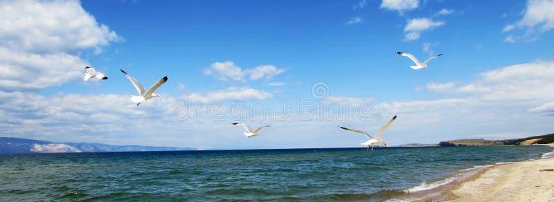 Seemöwen, die im blauen Himmel mit Wolken schweben stockfotografie