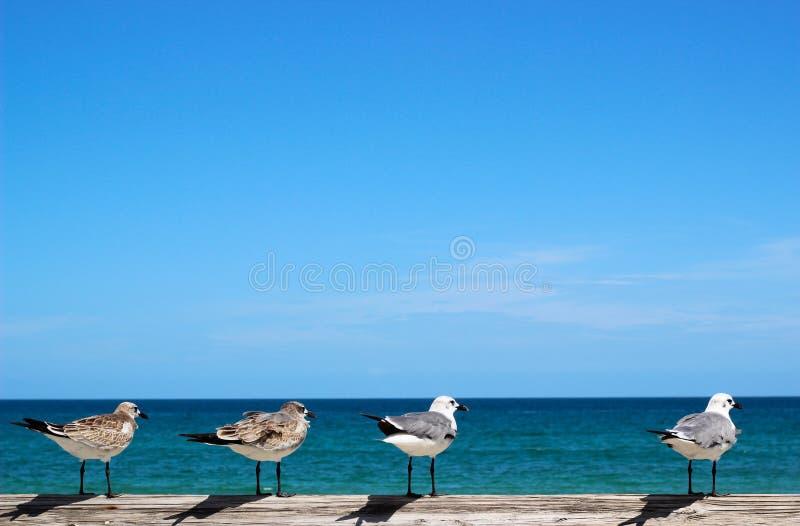 Seemöwen, die Ozean betrachten lizenzfreies stockfoto