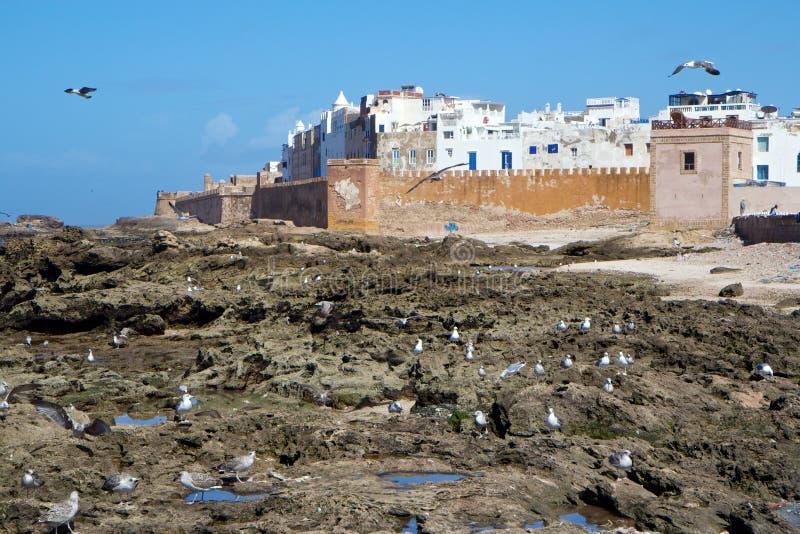 Seemöwen durch die alten Wände von Medina von Essaouira, Marokko lizenzfreies stockbild