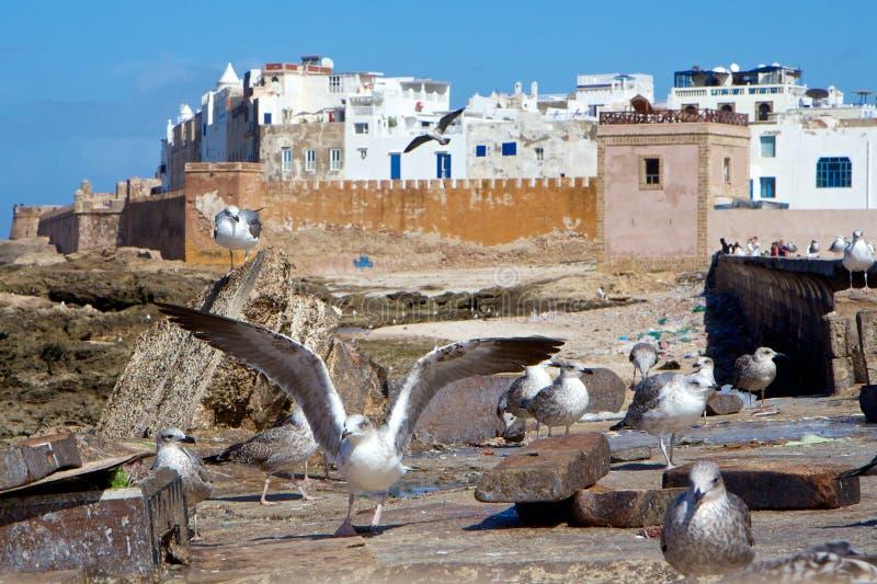 Seemöwen durch die alten Wände von Medina von Essaouira, Marokko lizenzfreies stockfoto