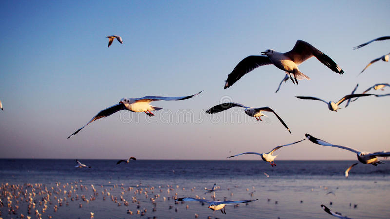 Seemöwen, Fliegenvögel lizenzfreies stockfoto