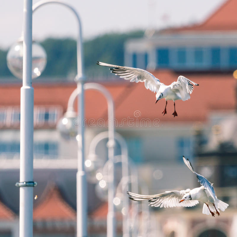 Seemöwen flyingon der Pier in Sopot, Polen stockfotografie