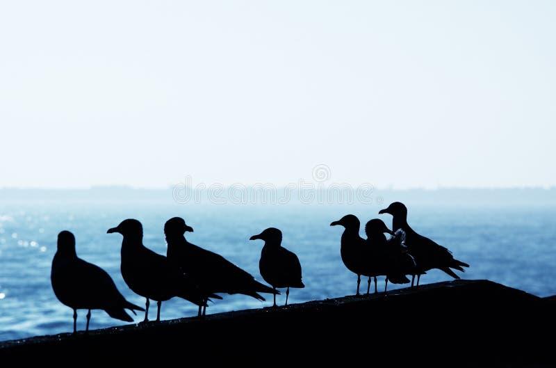 Seemöwen im Hafen stockbild
