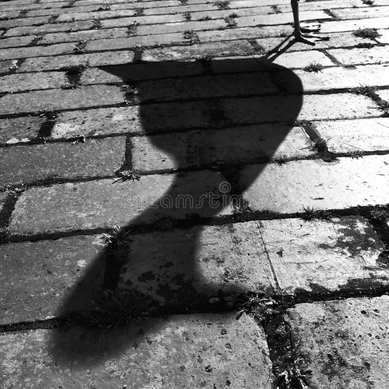 Seemöwen-schwarzer u. weißer Schatten stockfotografie
