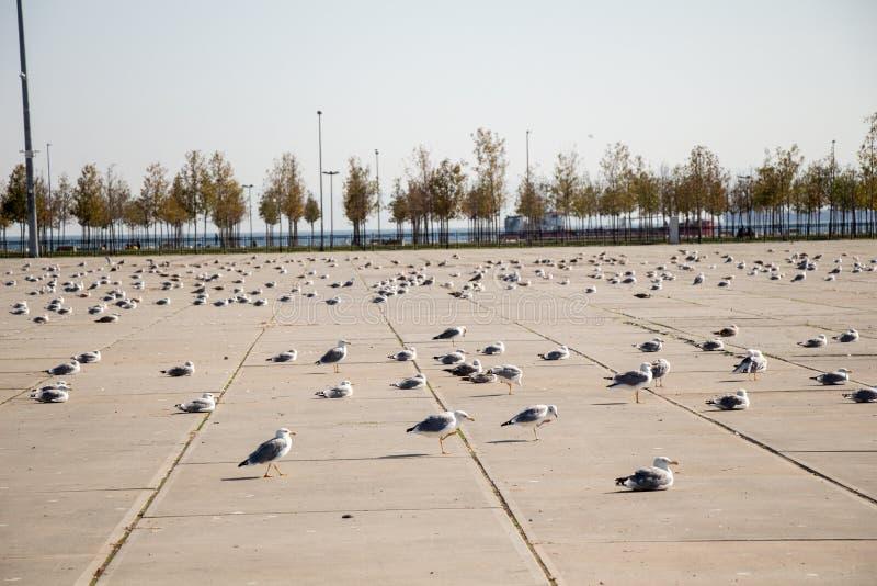 Seemöwen sind auf Rest auf einem konkreten Boden stockbilder