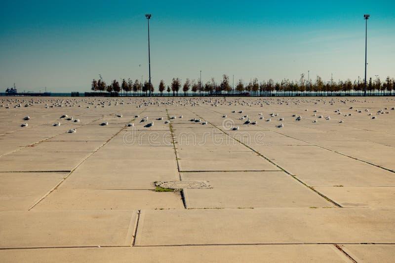 Seemöwen sind auf Rest auf einem konkreten Boden lizenzfreies stockbild
