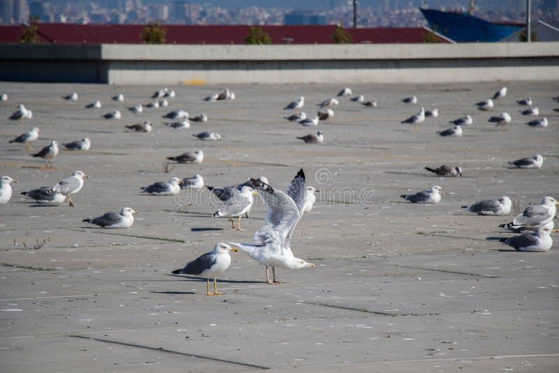 Seemöwen sind auf Rest auf einem konkreten Boden lizenzfreies stockfoto