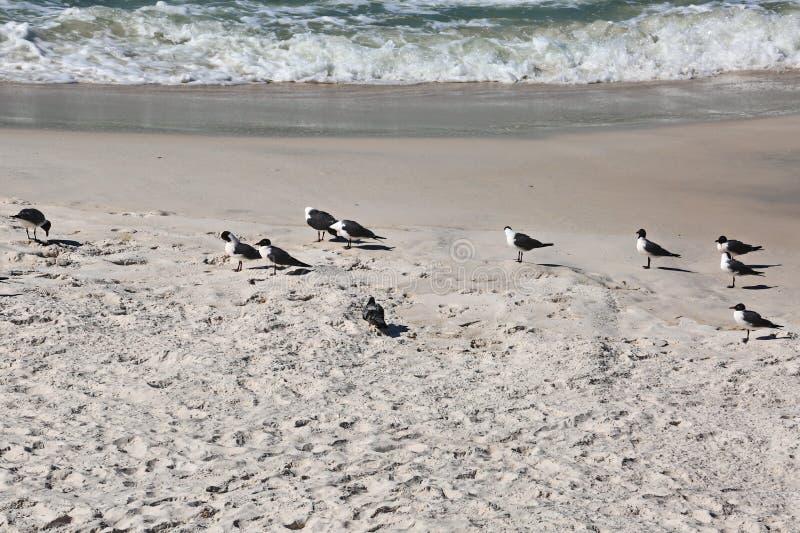 Seemöwen und Meereswogen lizenzfreie stockfotos