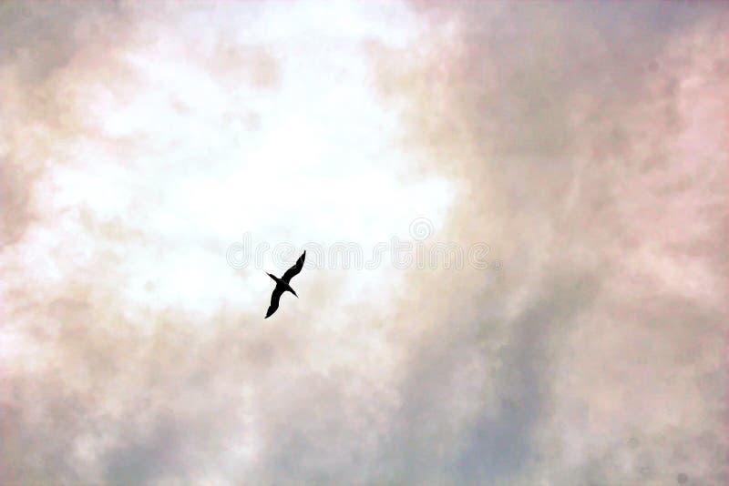 Seemöwen und Vögel, die im Himmel gegen einen Hintergrund von weißen und bunten Wolken und von Küstenlinie schweben lizenzfreie stockbilder