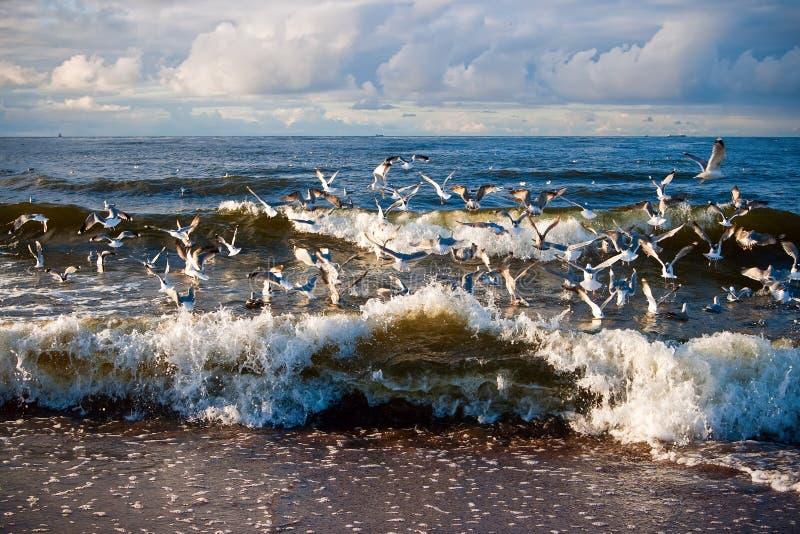 Seemöwen und Wellen lizenzfreie stockfotos