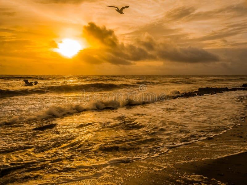Seemöwen, zusammenstoßende Wellen und wirbelnde Brandung lizenzfreie stockfotos