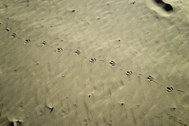 Seemöwenabdrücke auf dem Sand stockfotografie