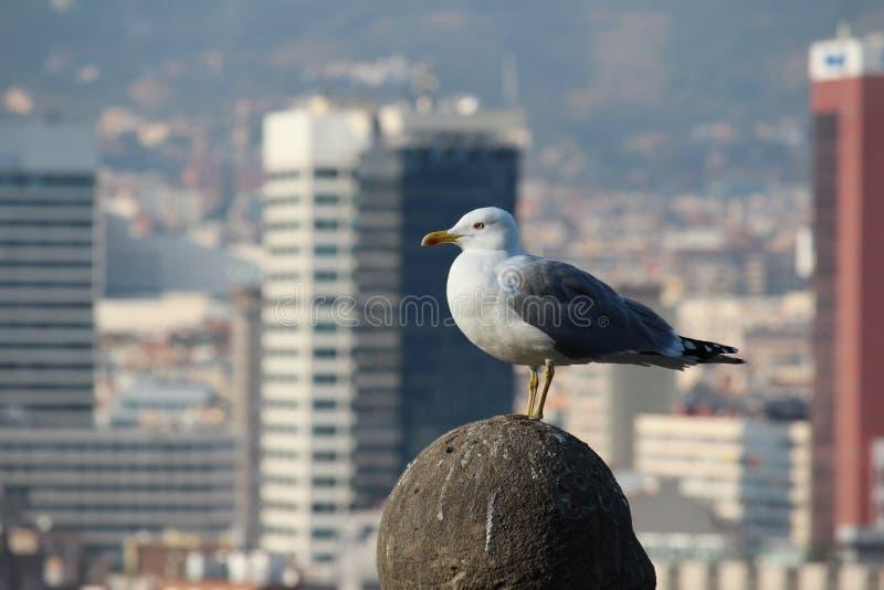 Seemöwenansicht von Barcelona lizenzfreie stockfotos