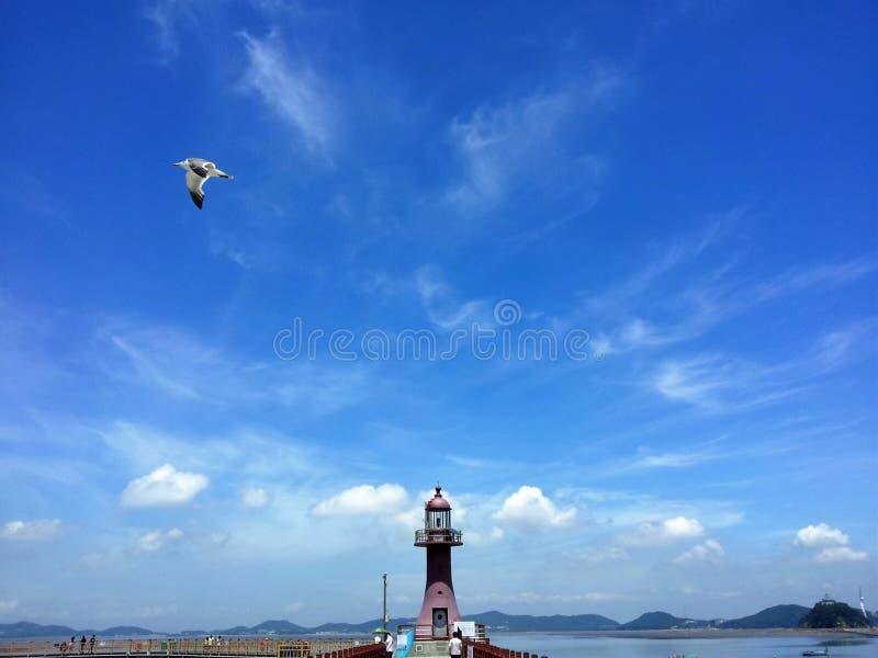 Seemöwenfliegen über dem roten Leuchtturm, Jebu-Insel, Korea stockfotografie