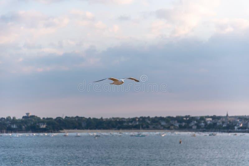 Seemöwenfliegen über Küste bei Sonnenuntergang mit Kopienraum lizenzfreie stockfotografie
