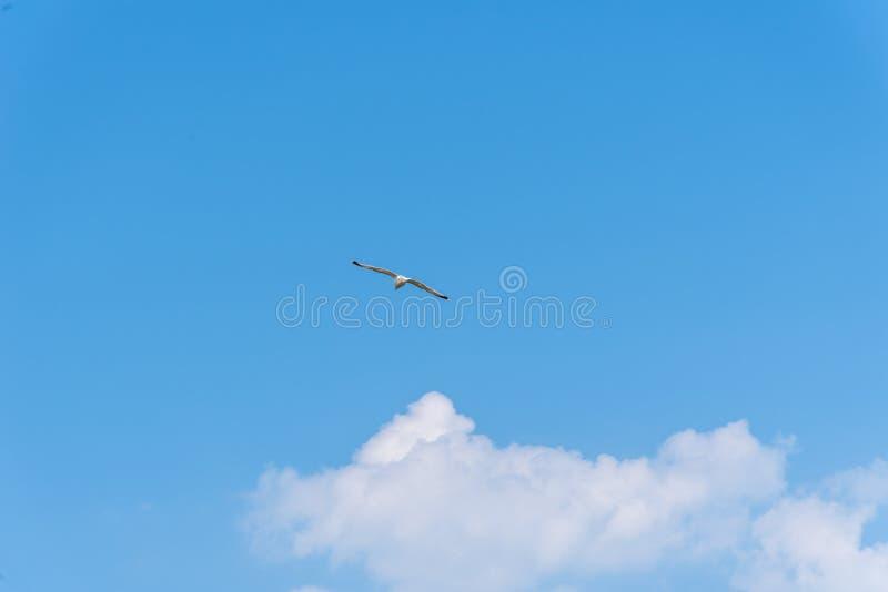 Seemöwenfliegen gegen blauen Himmel mit copyspace stockfoto