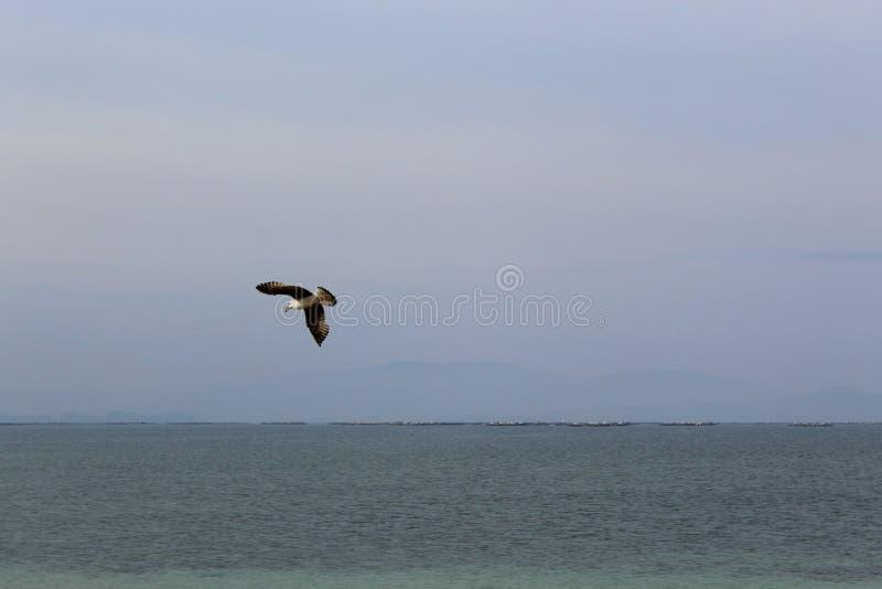 Seemöwenfliegen im blauen Meer lizenzfreie stockfotos