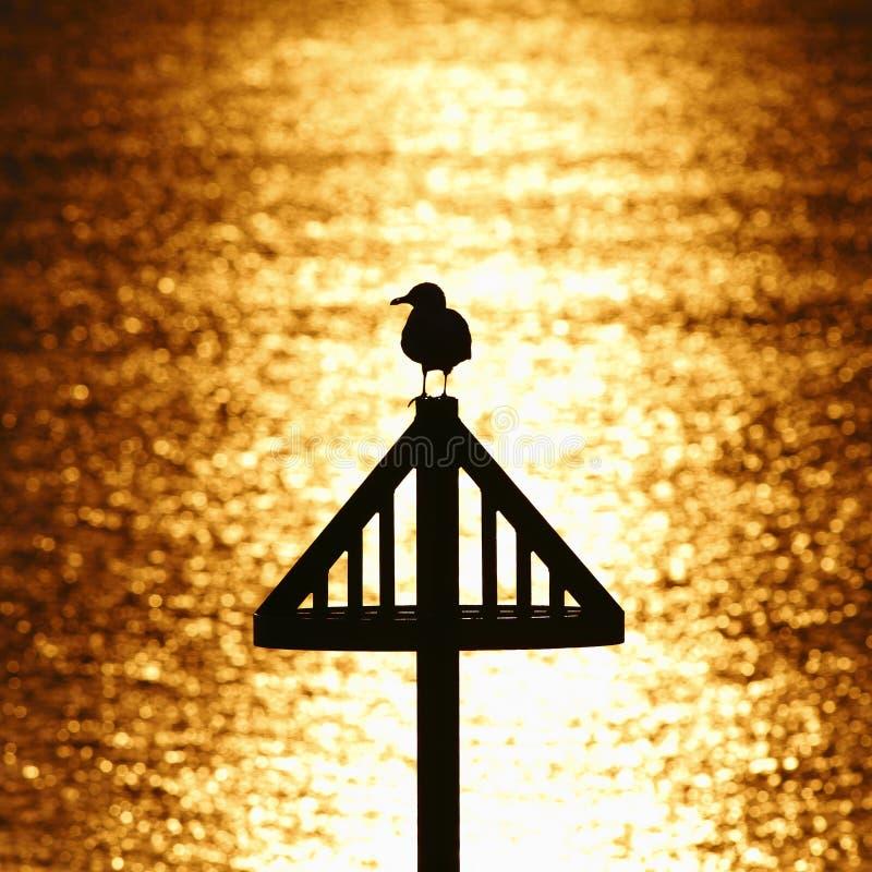 Seemöwenschattenbild gegen goldenen Sonnenuntergang lizenzfreie stockbilder