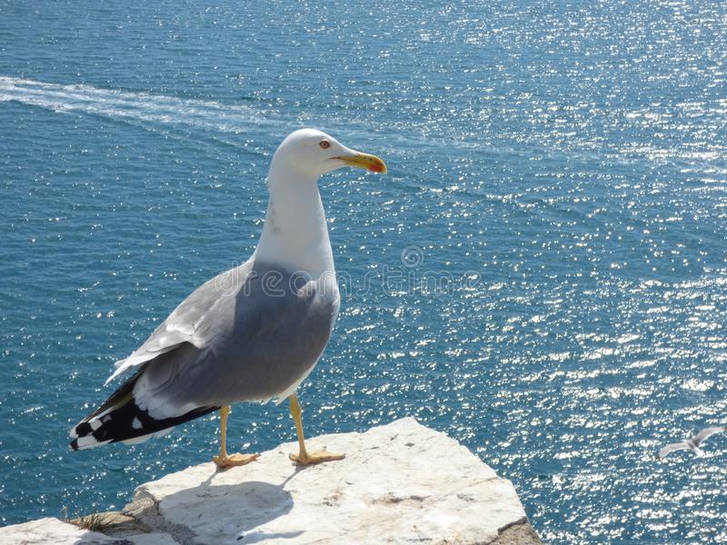 Seemöwenstellung auf einer Schlosswand, die das Meer übersieht lizenzfreie stockfotos