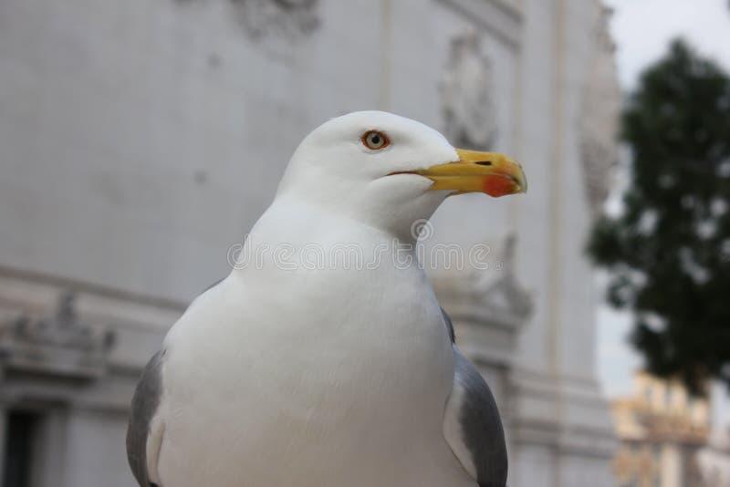Seem?wenvogel stockbilder